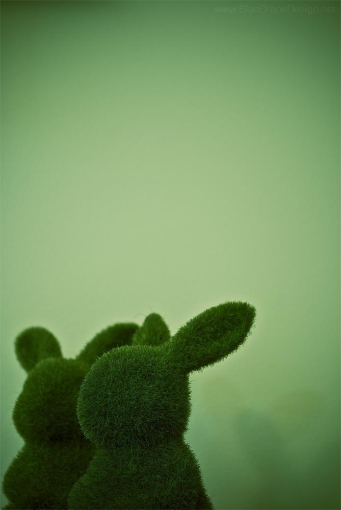 Grass bunnies